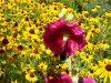 wisconsin-garden-july-21-080